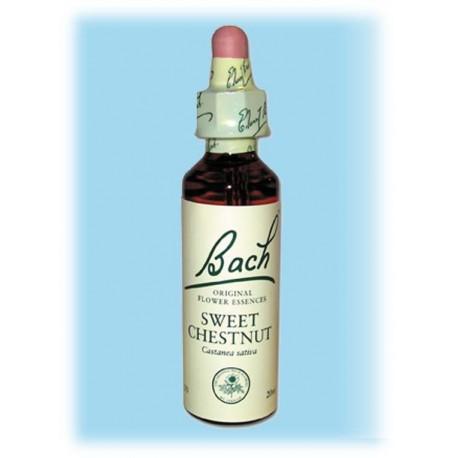 Equilibre émotionnel fleur de bach Sweet Chestnut (Châtaignier) - 20 ml