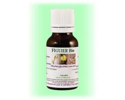Gemmothérapie macérât de bourgeon Figuier stress maux d'estomac - 30 ml
