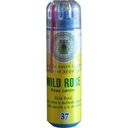 Equilibre émotionnel fleur de bach sans alcool Wild rose (n°37) apporte dynamisme et enthousiasme